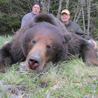 Alaska Brown Bear Hunts