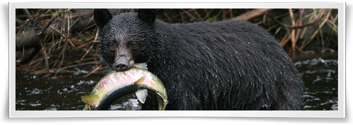 alaska-black-bear-hunting-form