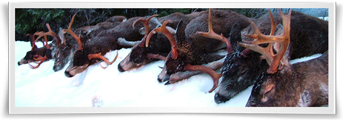 alaska-sitka-blacktail-deer-hunting-form