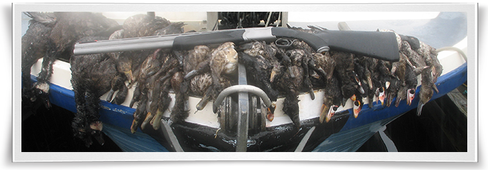 alaska-trophy-sea-duck-hunting-form