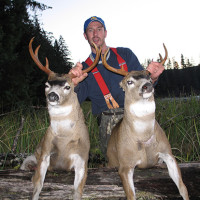 Alaska Sitka Blacktail deer