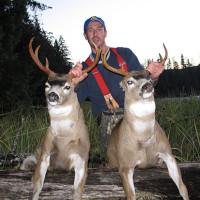 Alaska Sitka Blacktail deer