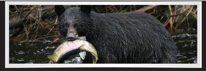 alaska-black-bear-hunting-form